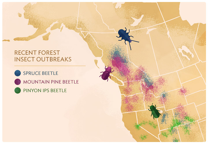 Pine On The Decline - Mapping of the affected areas of the Mountain Pine Beetle