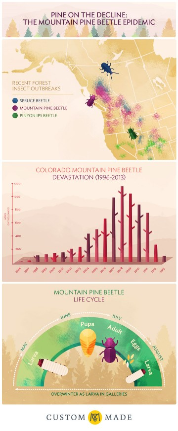Pine on the Decline: The Mountain Pine Beetle Epidemic Infographic