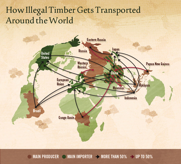 Illegal Logging - How Illegal Timber Gets Transported Around The World