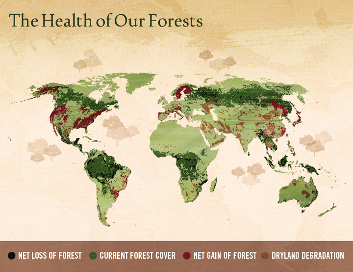 Illegal Logging - The Health of Our Forests