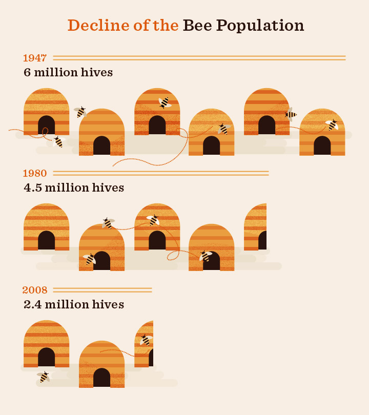 Decline of the Bee Population
