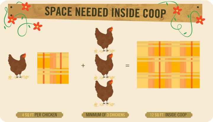 Space Needed Inside Coop