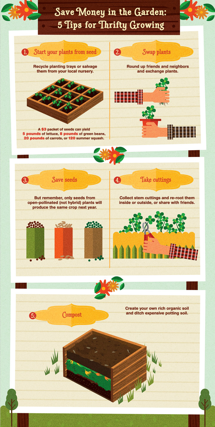 Save Money in the Garden: 5 Tips for Thrifty Growing