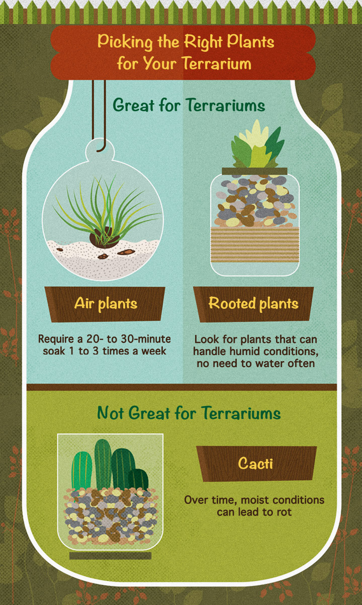 How to Build Your Own Terrarium #diy #terrarium