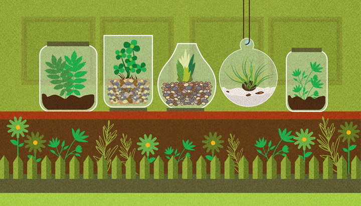 How to Build Your Own Terrarium: A Black Thumb Guide to Life in a Bottle