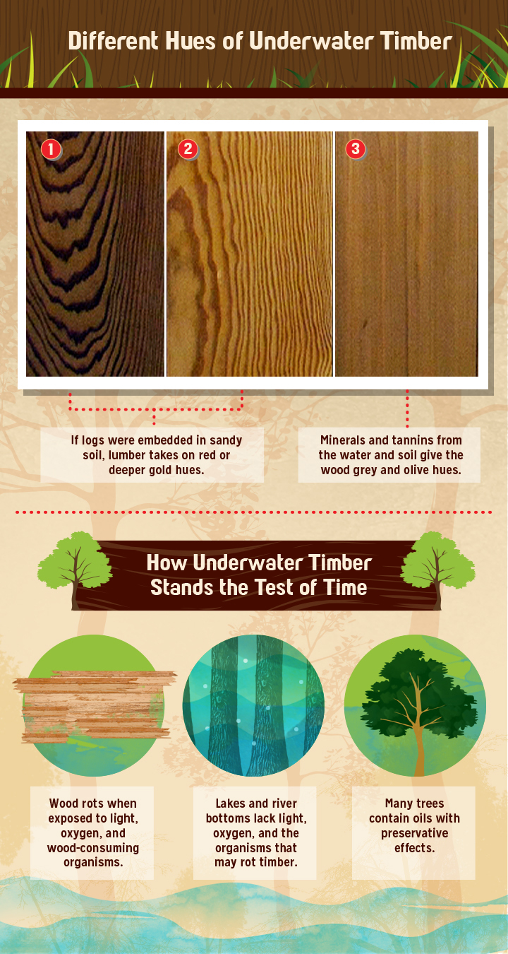 Different Hues of Underwater Timber
