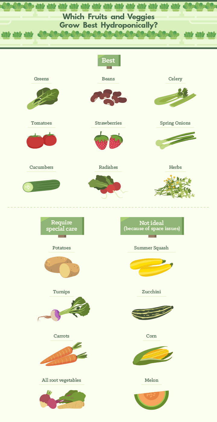 Which Fruits and Veggies Grow Best