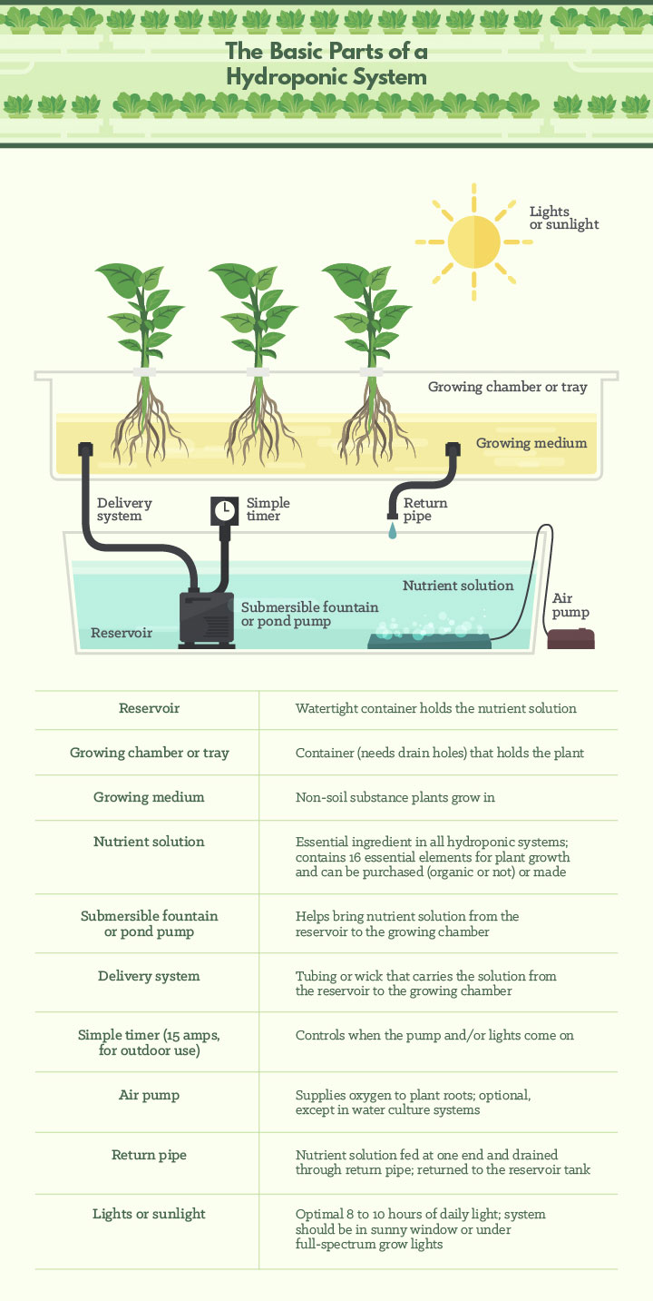 The Basic Parts of a Hydroponics System
