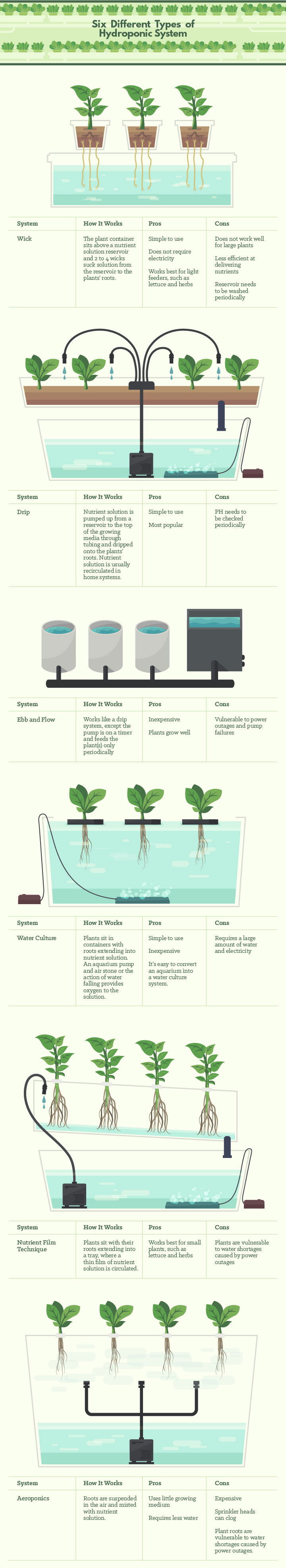 Growing Soilless Your Introduction To Hydroponics Gardening