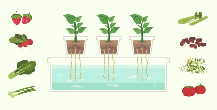 The History & Introduction to Hydroponics