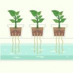 Growing Soilless: Your Introduction to Hydroponics