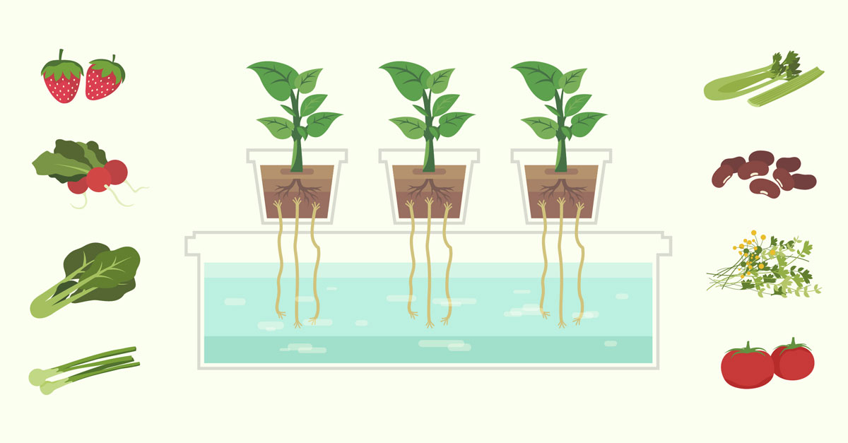 an introduction to hydroponics soilless agriculture The soilless type of agriculture is disscussed in detail with its soilless agriculture index introduction 4 objectives 7 hydroponics 8 types of.