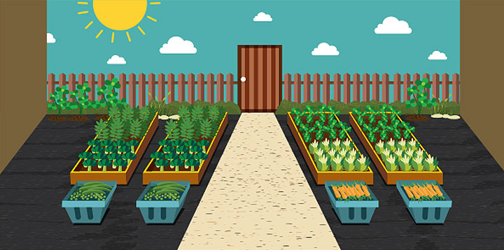 Raise the Roof: How to Plant a Rooftop Garden