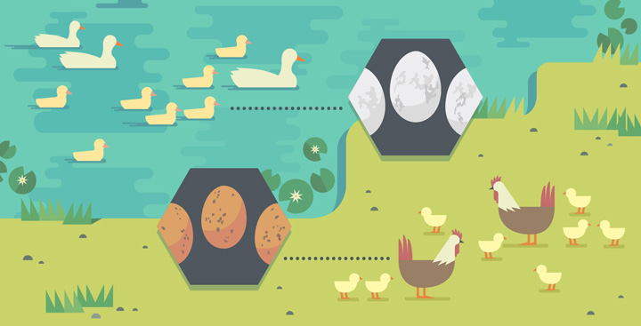 Raising Chickens and Ducks With Ingenuity and DIY Hacks