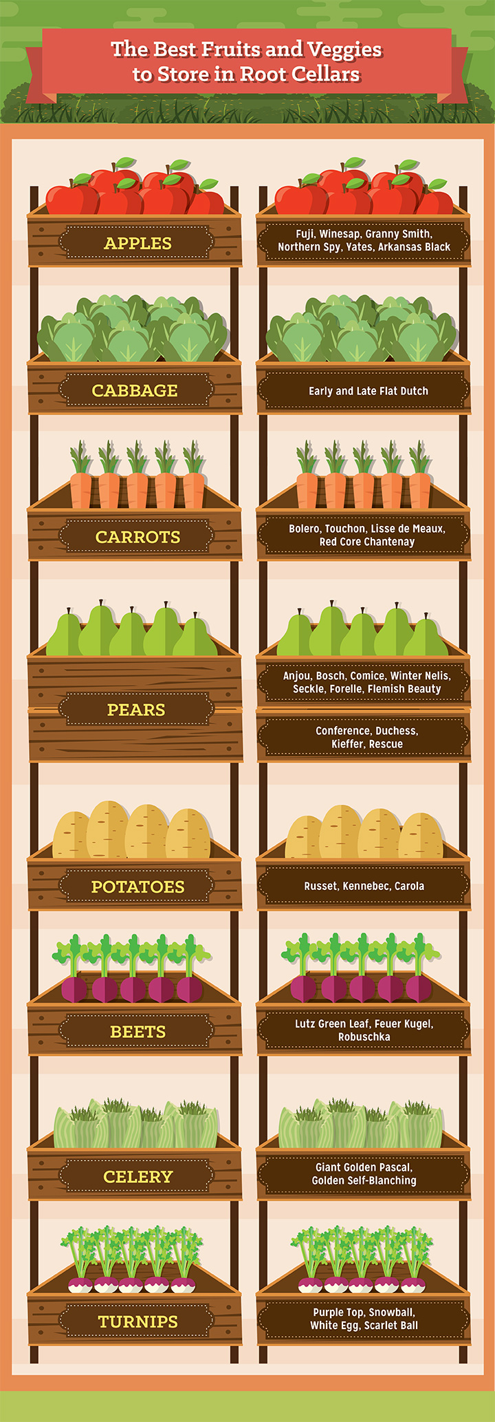 The Best Fruits and Veggies to Store in Root Cellars