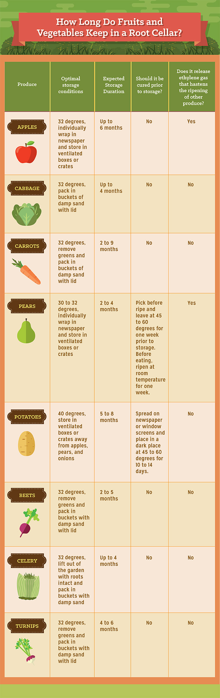 How Long Do Fruits and Vegetables Keep in a Root Cellar