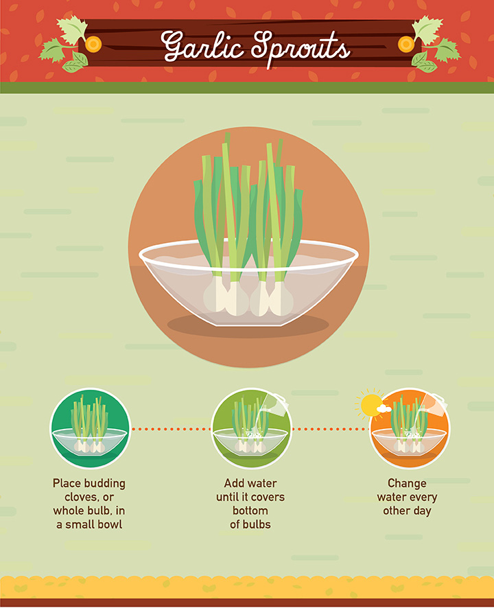 16 Foods That Ll Re Grow From Kitchen Scraps: 19 Foods You Can Regrow From Scraps #foodwaste