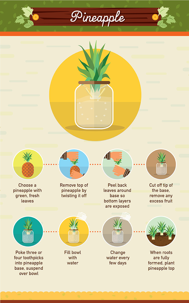 19 Foods You Can Regrow From Scraps  Foodwaste